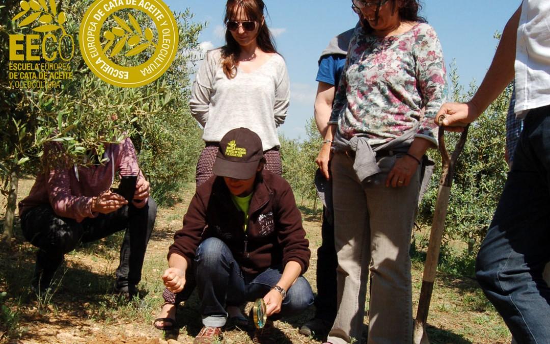 Curso de Olivicultura: Iniciación en el manejo del olivar dirigido a la obtención de aceites de oliva virgen extra de calidad. ¿Cómo gestiono mi olivar?