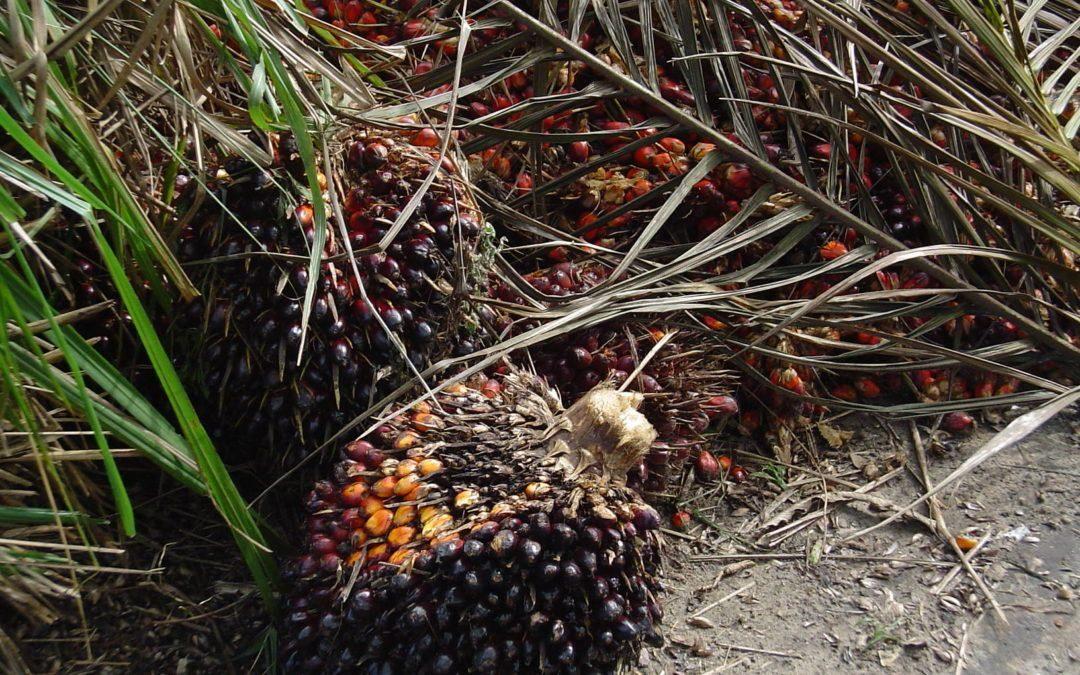 Formación e información frente a la manipulación con respecto al «aceite de palma»
